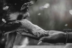 Dog-Paw